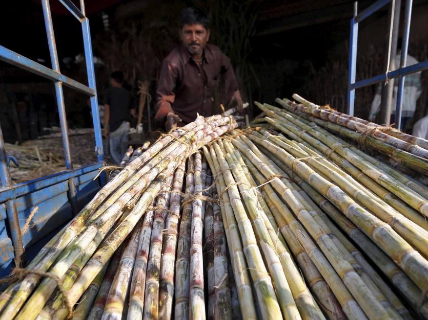 A worker loads sugarcane into a load carrier at a wholesale market in Ahmedabad, India, January 11, 2016.