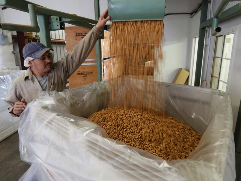 Carmelo Morillo fills a shipping container with almonds at Capay Canyon Ranch in Esparto, California, U.S. April 2, 2018.