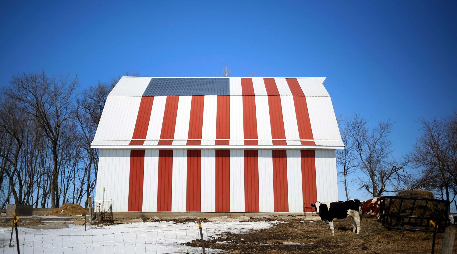 A cow stands in front of barn painted with a U.S. flag in Homestead, Iowa. Iowa, the American heartland with endless farm fields and quiet towns. March 7, 2015.